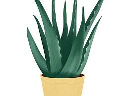 插画植物练习