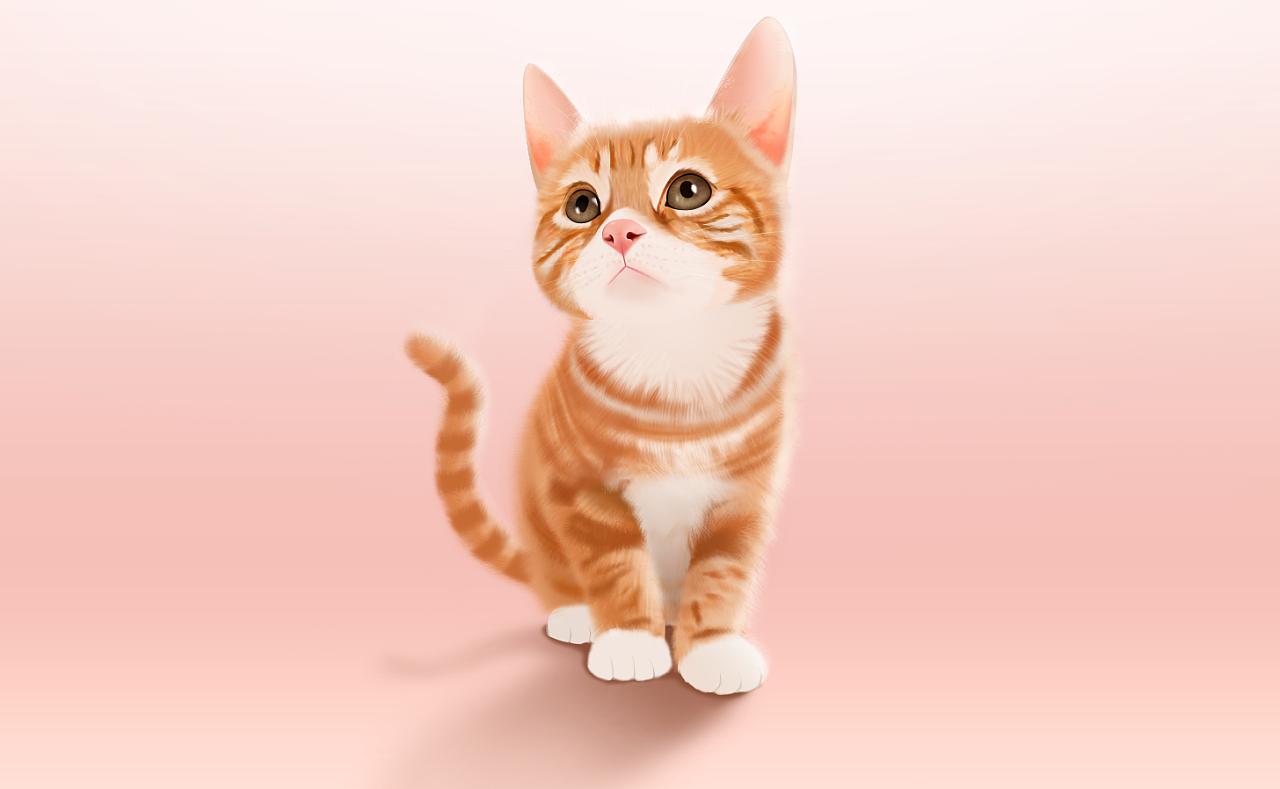 壁纸 动物 猫 猫咪 小猫 桌面 1280_789