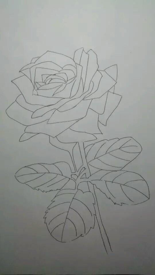 玫瑰花的简笔画 素描图解
