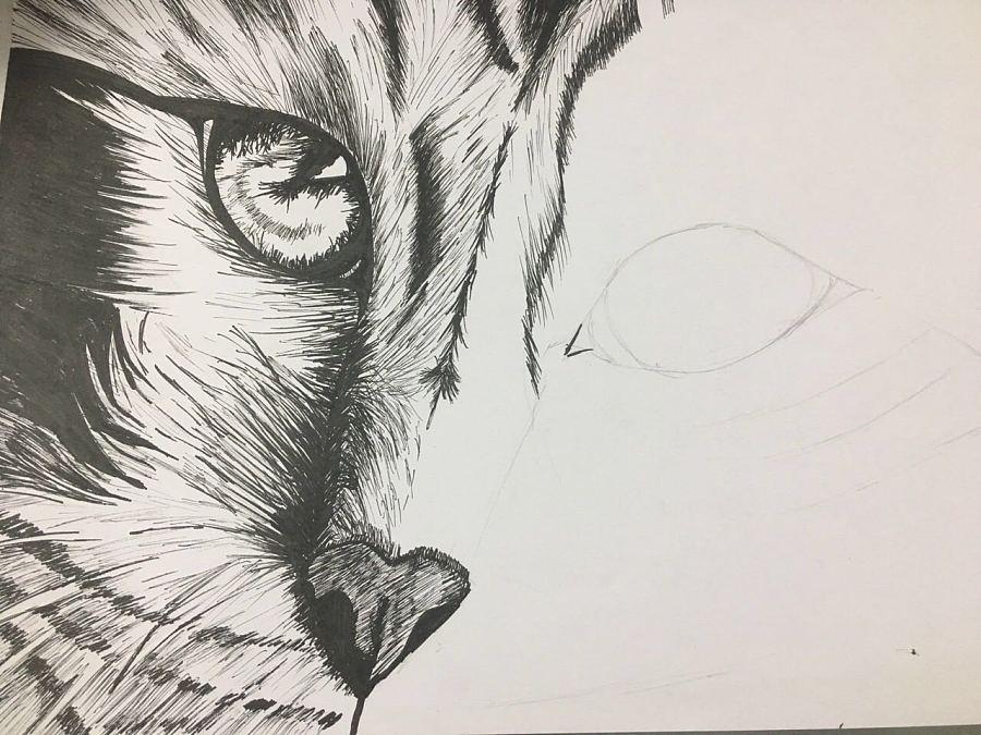 原创作品:针管笔手绘 猫