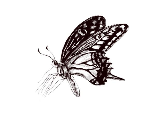 动物昆虫PS素描插画