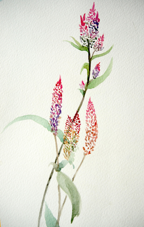 第1期手绘水彩花鸟班作品