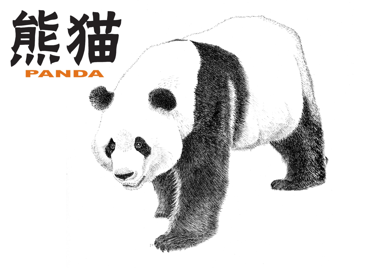 手绘熊猫 明信片