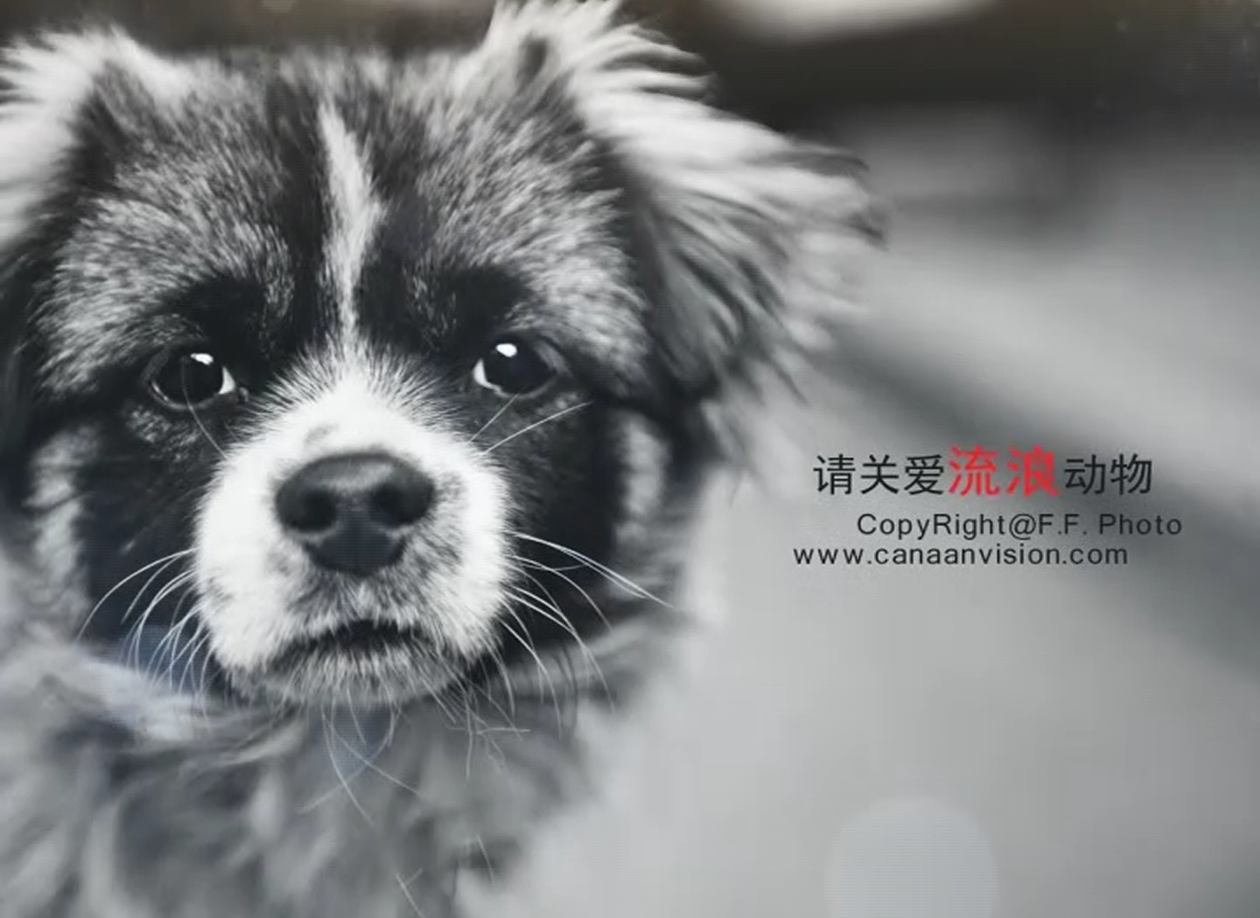 关爱流浪动物视频制作 让我们一起关爱小动物吧 edius