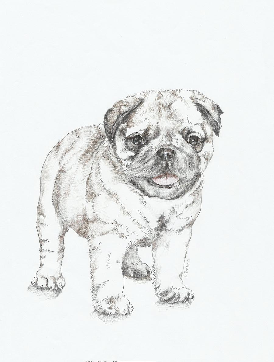 彩铅狗狗绘画过程-03|绘画习作|插画|王叮叮