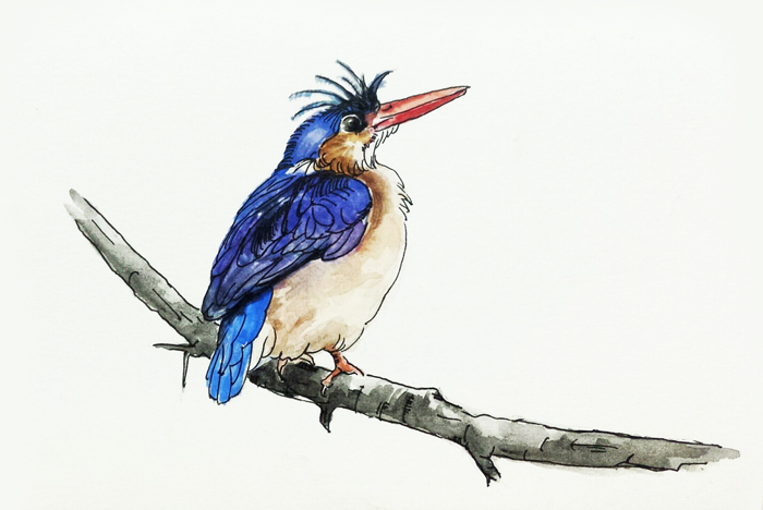 查看《动物手绘-鸟类》原图,原图尺寸:700x468