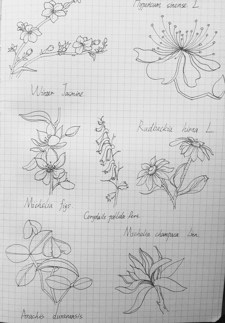 黑白花朵手绘手账|插画习作|插画|手撕牛肉肉肉