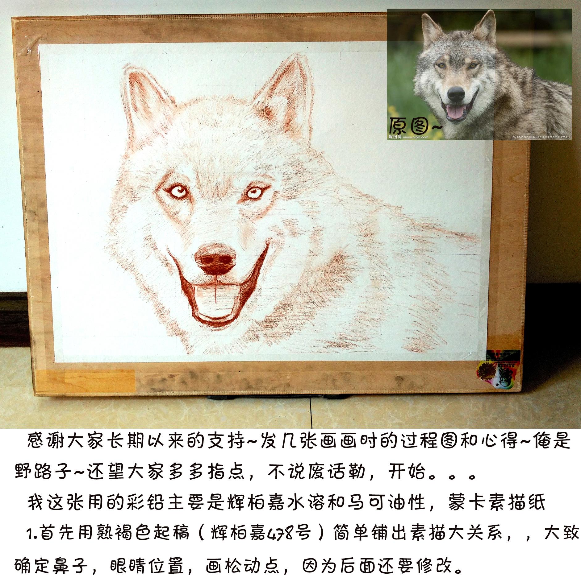 彩铅手绘教程~草原狼