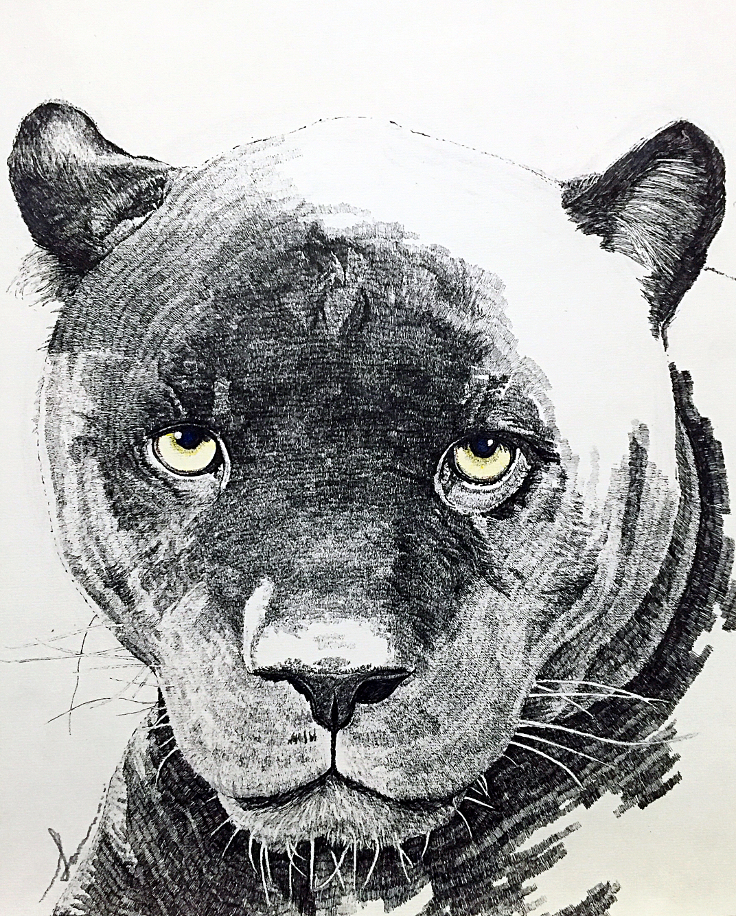 黑豹马克笔手绘