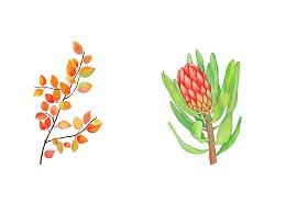 植物水彩扁平插画元素练习