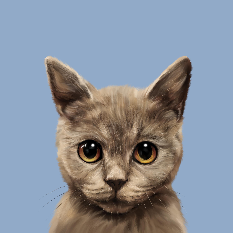 蓝猫 宠物手绘 宠物头像 宠物插画 手绘约稿