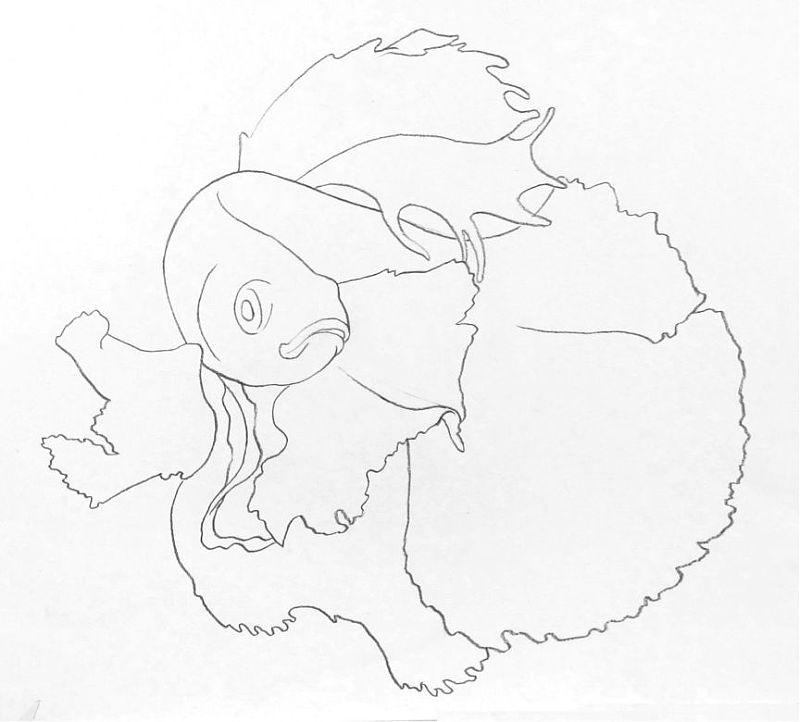 教程:彩色铅笔画步骤教程:泰国斗鱼的画法 (原创文章)