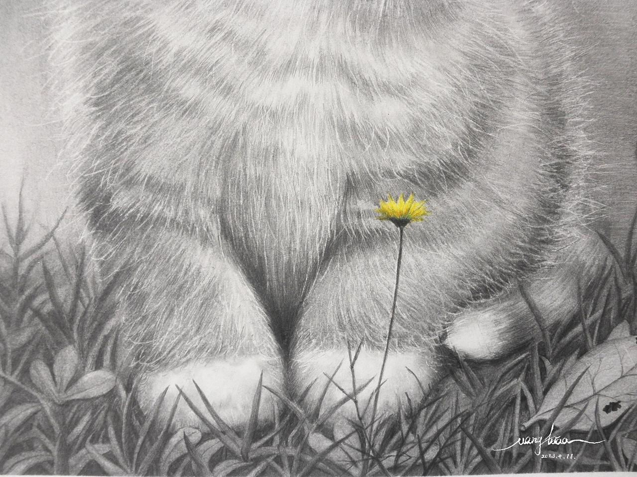 铅笔画《猫咪》