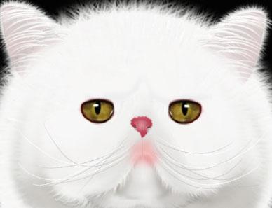 动物猫咪头像简笔