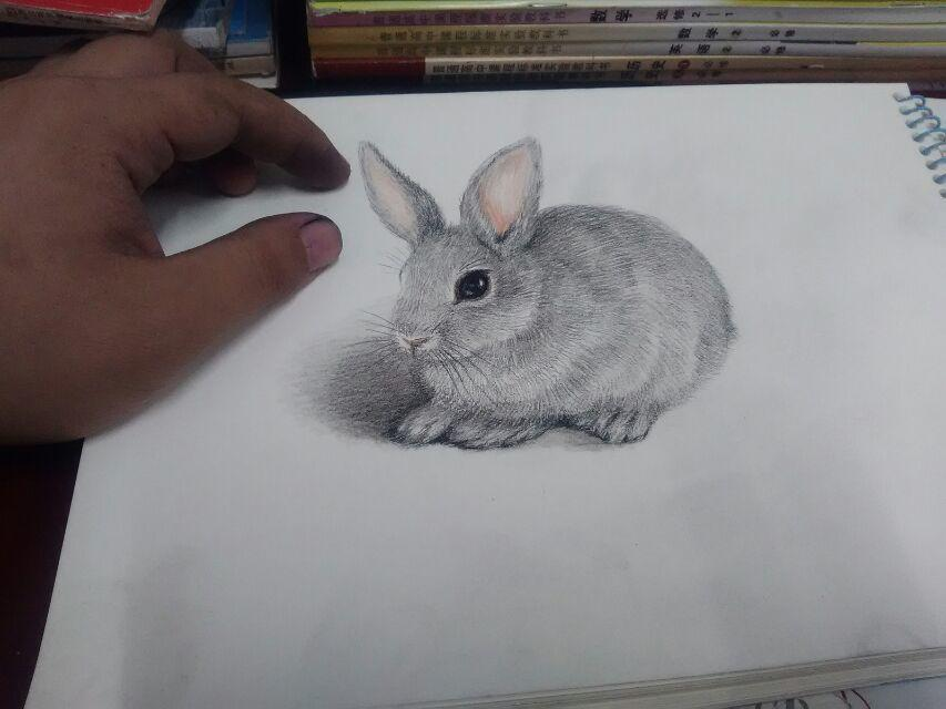 彩铅动物习作《动物》