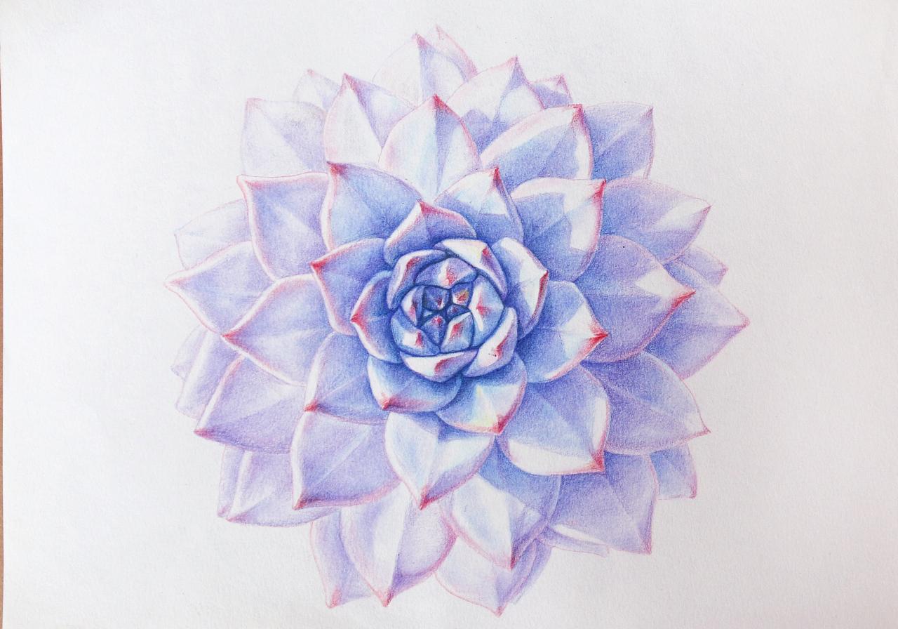 多肉植物手绘蓝鸟,油性彩铅