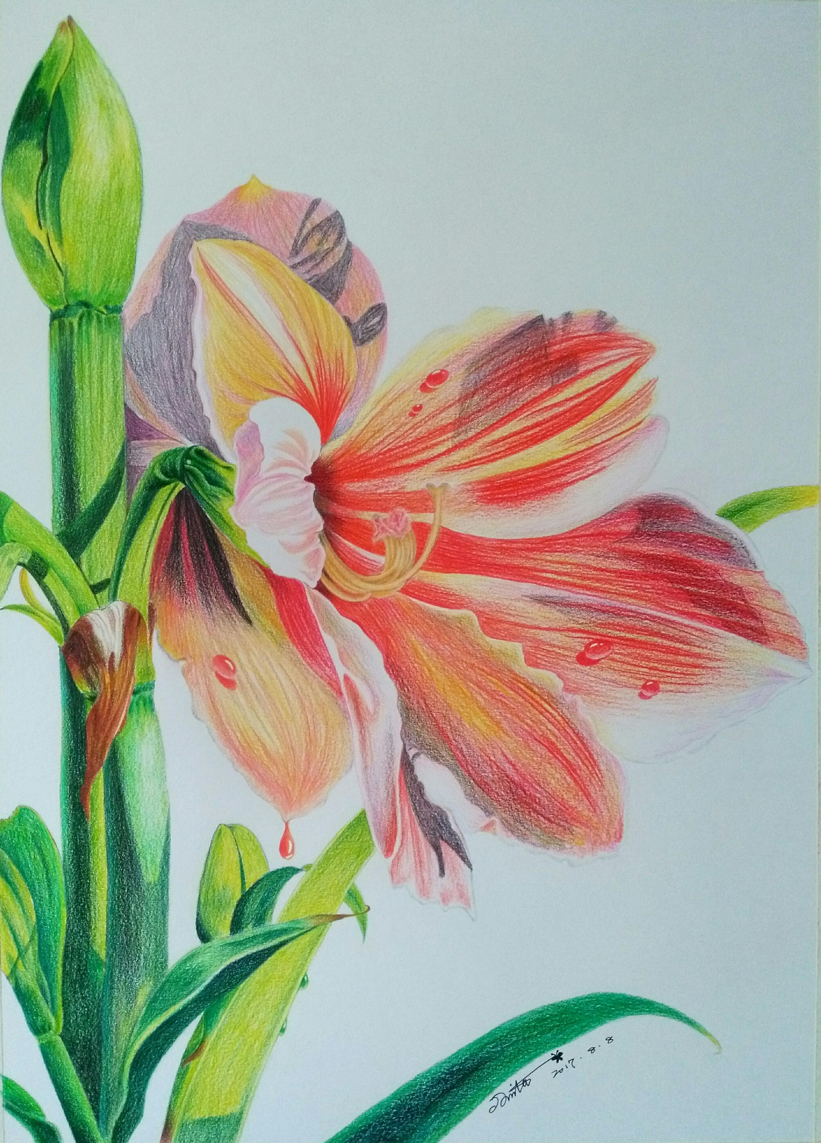 彩铅花卉|纯艺术|彩铅|燕京 - 原创作品 - 站酷图片