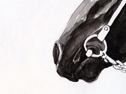 黑马与白马