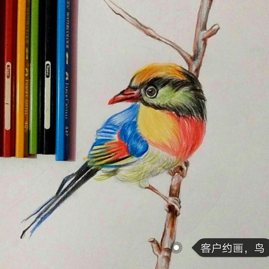 彩铅画——鸟