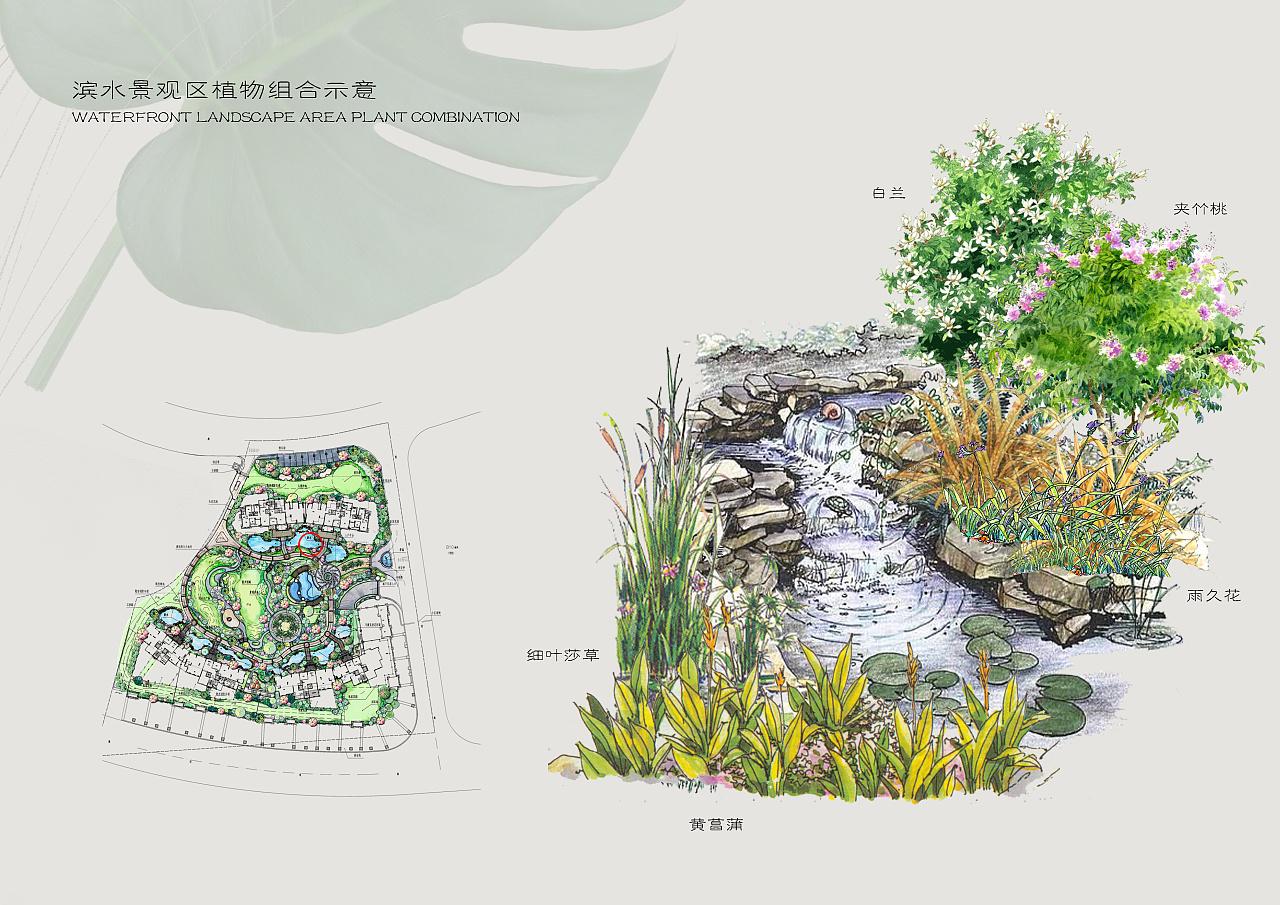 植物手绘图平面图