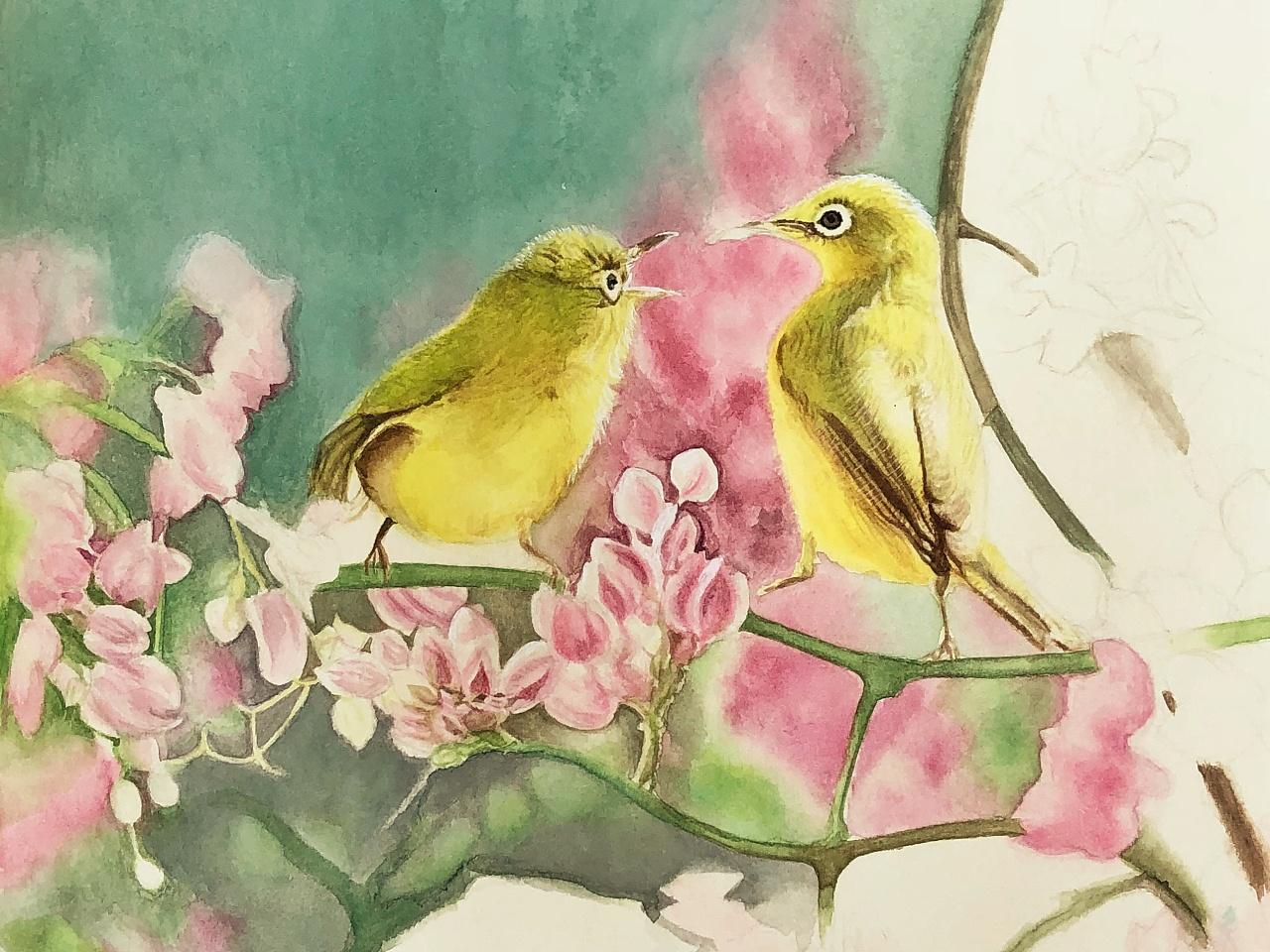 绣眼鸟-水彩手绘