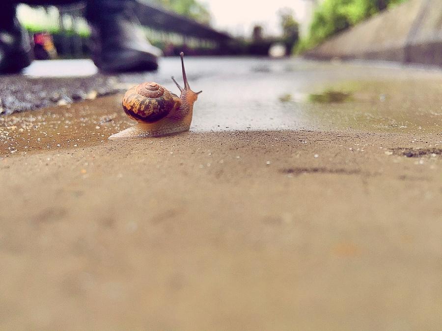 苹果手机——小蜗牛|动物|摄影|黑暗水水 - 原创设计