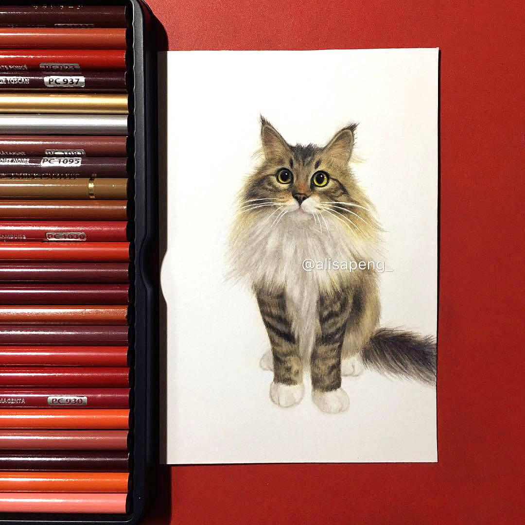 彩铅 西伯利亚森林猫图片