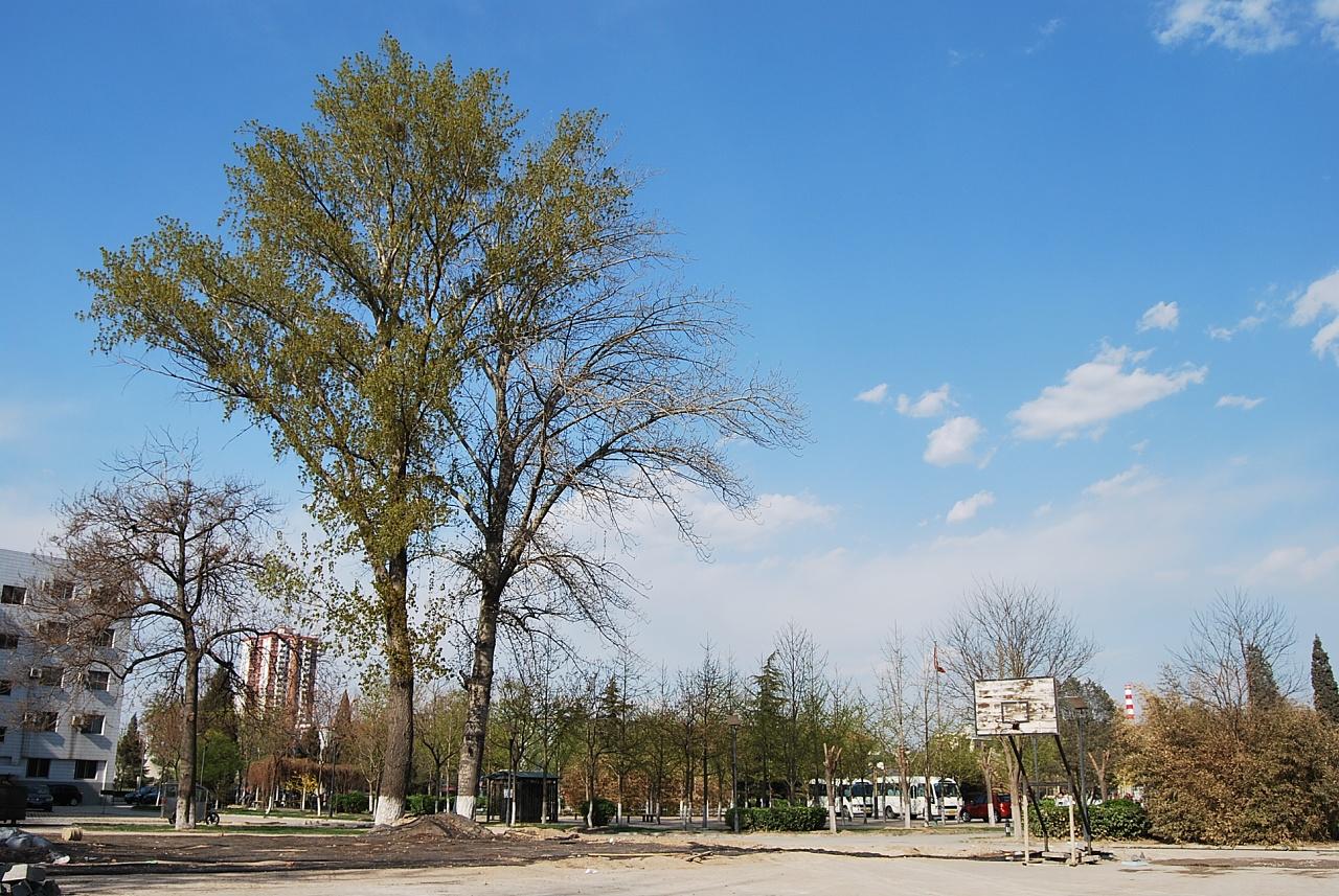 大学校园里的树