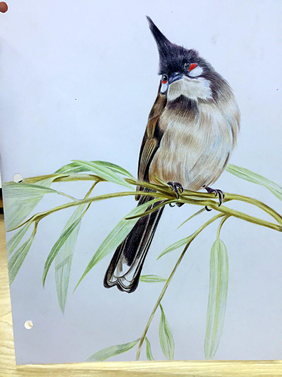 彩铅手绘图片 动物
