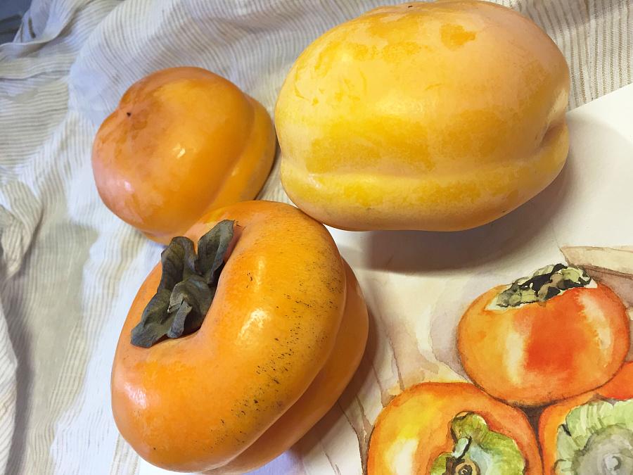水彩手绘-霜降吃柿子
