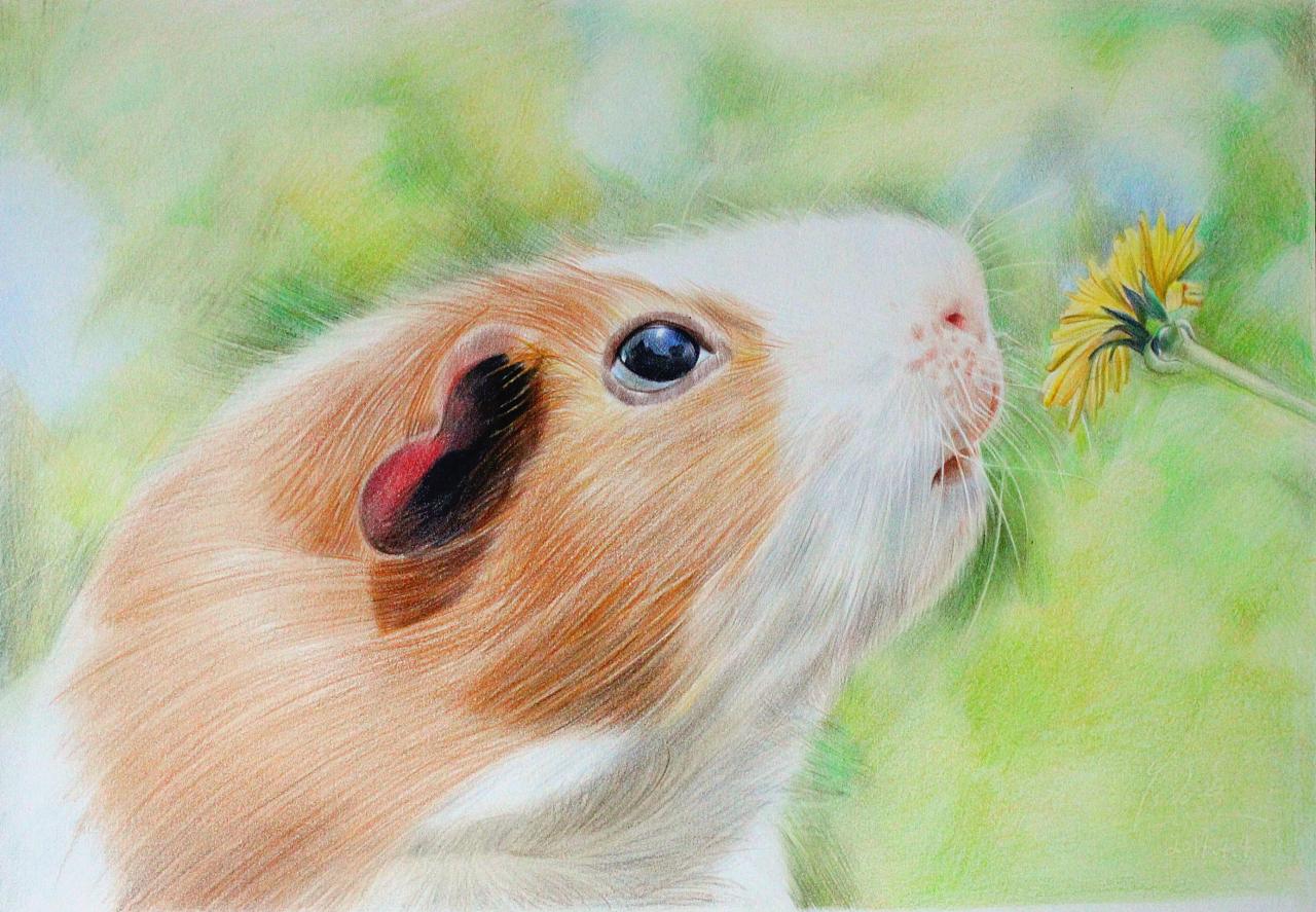 彩铅 动物系列