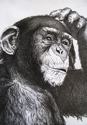 线绘. 猴子