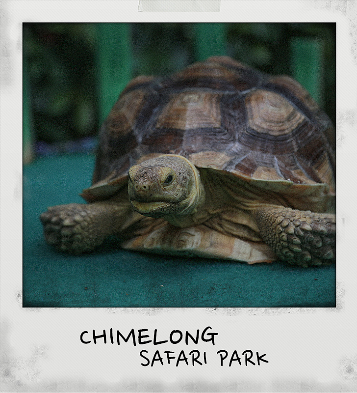 fxck22_广州长隆野生动物园|摄影|动物|longfxck - 原创作品
