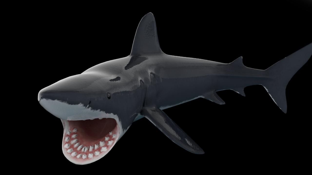 在青岛买来的真空包装鲨鱼肉不知怎样吃?谢谢!