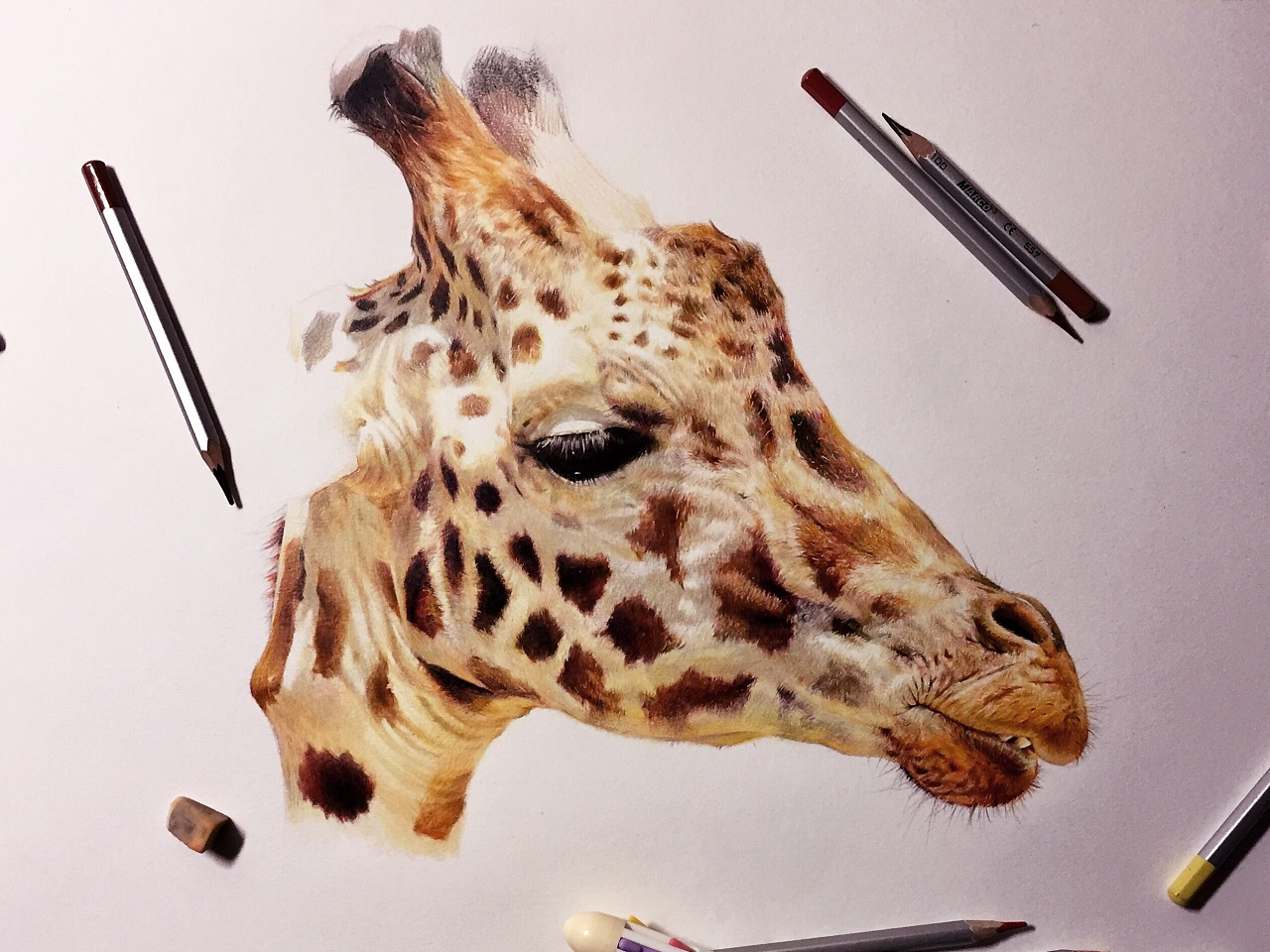 手绘鹿彩铅图片