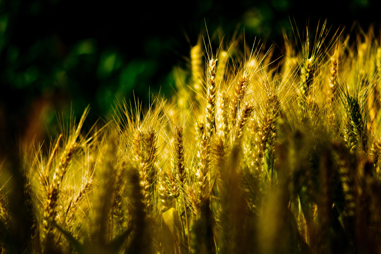 园麦穗手工制作