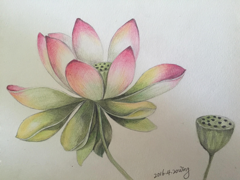 手绘彩铅|纯艺术|彩铅|幸福耀眼 - 原创作品 - 站酷