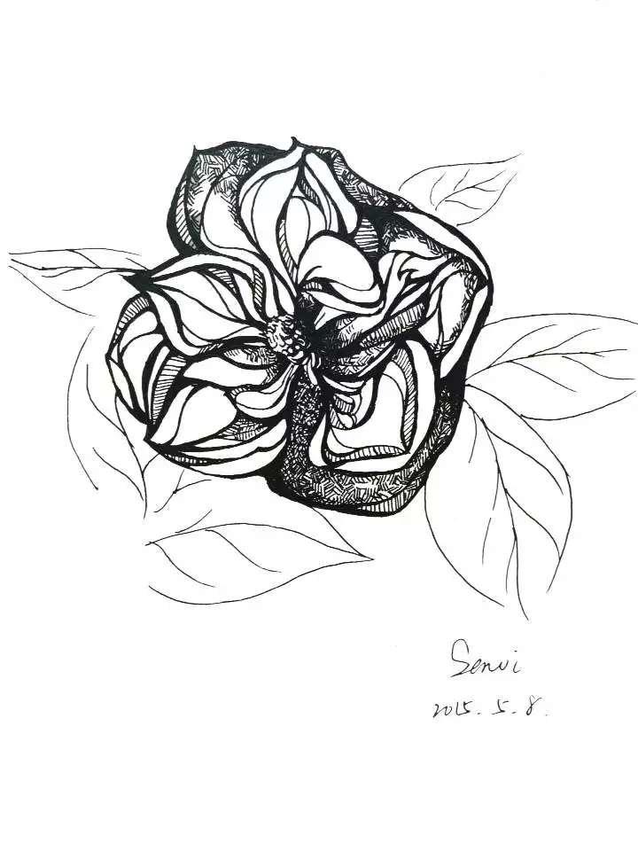 黑白手绘|绘画习作|插画|senvi33