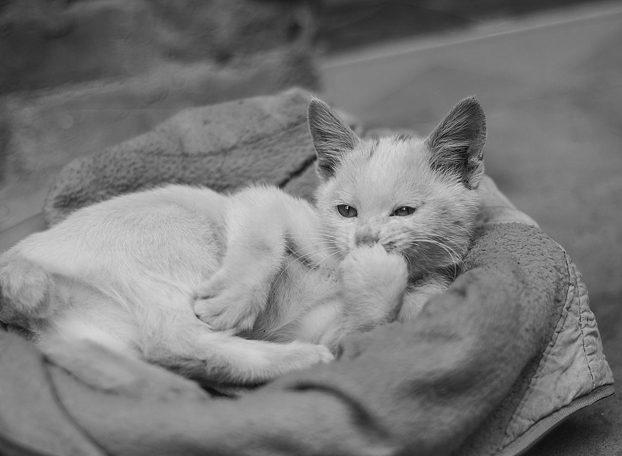 来自乡下的文艺——猫姐(>^ω^ )!|摄影|动物|小湘公
