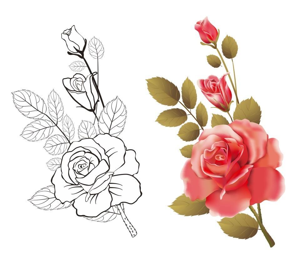 玫瑰 手绘