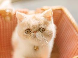 偶是一只叫做包子的猫