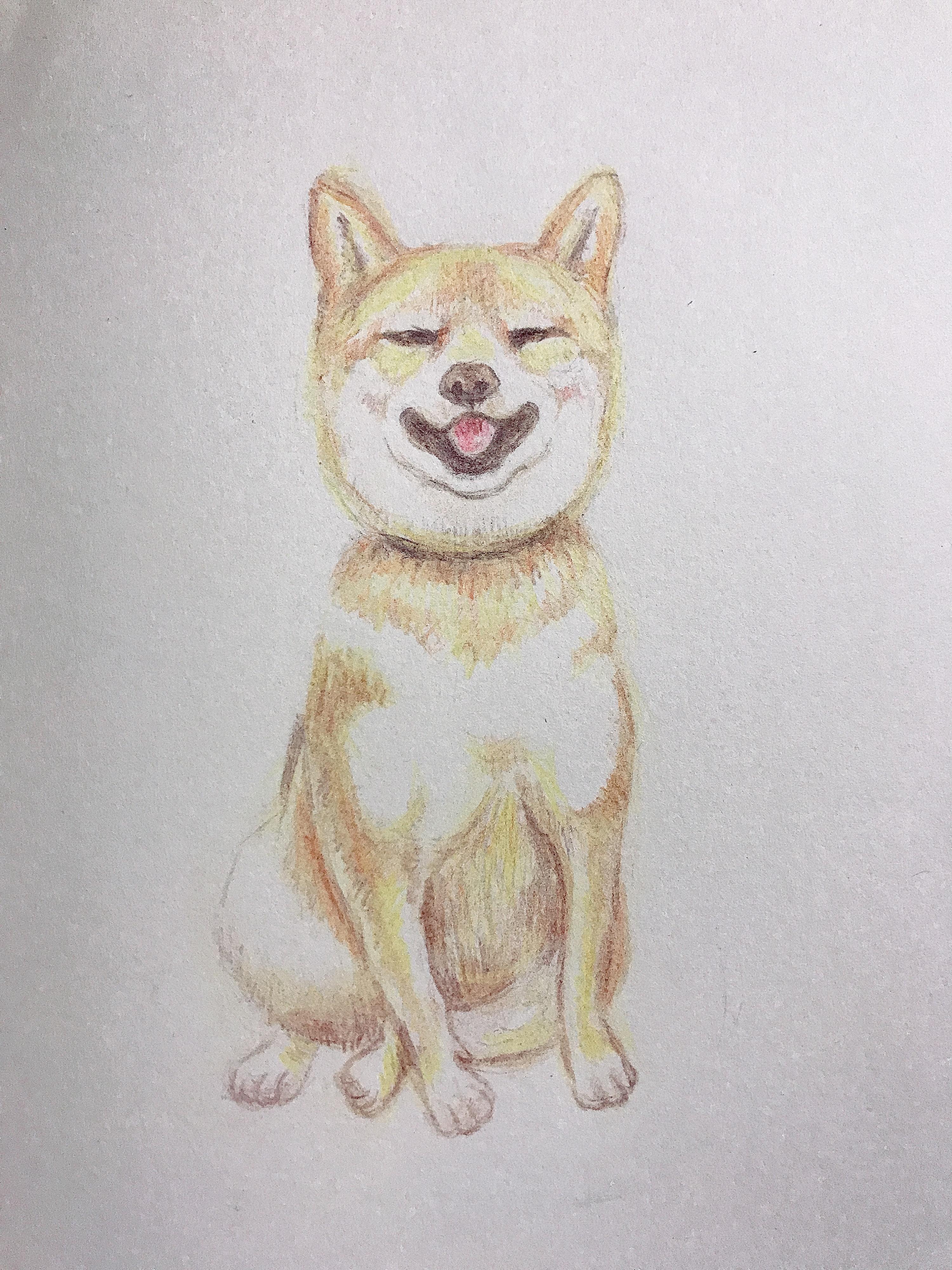 彩铅手绘——萌宠柴犬
