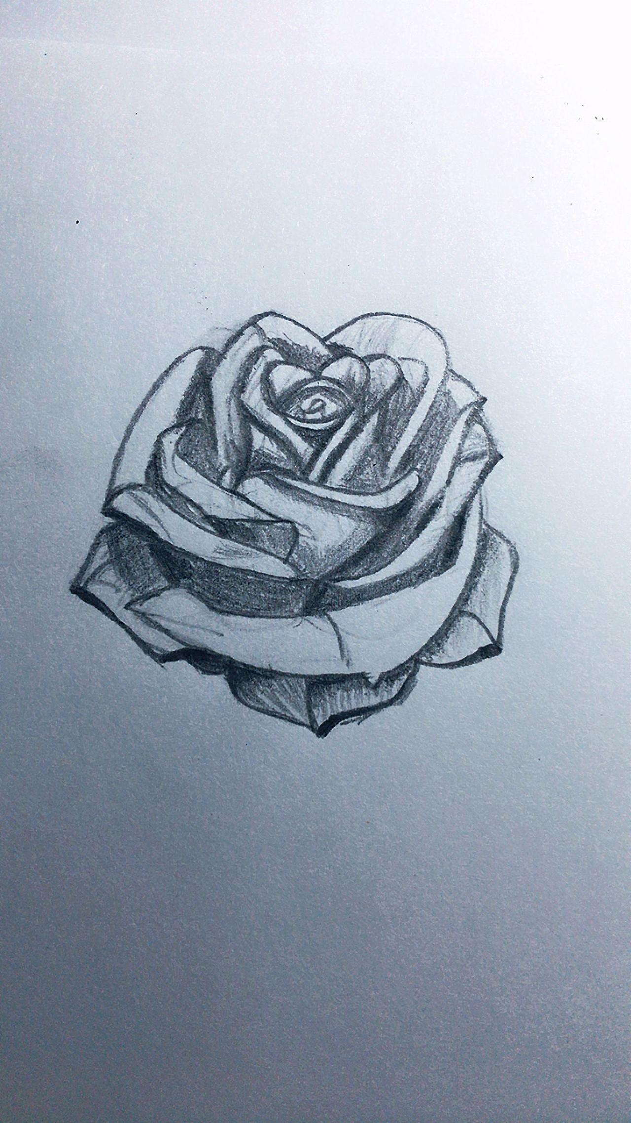 铅笔画玫瑰花