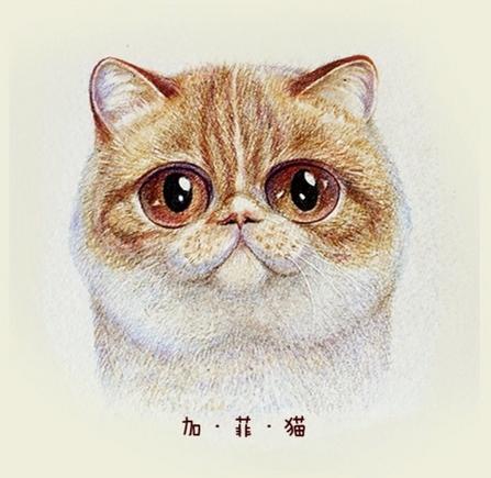 手绘各种呆萌猫咪插画