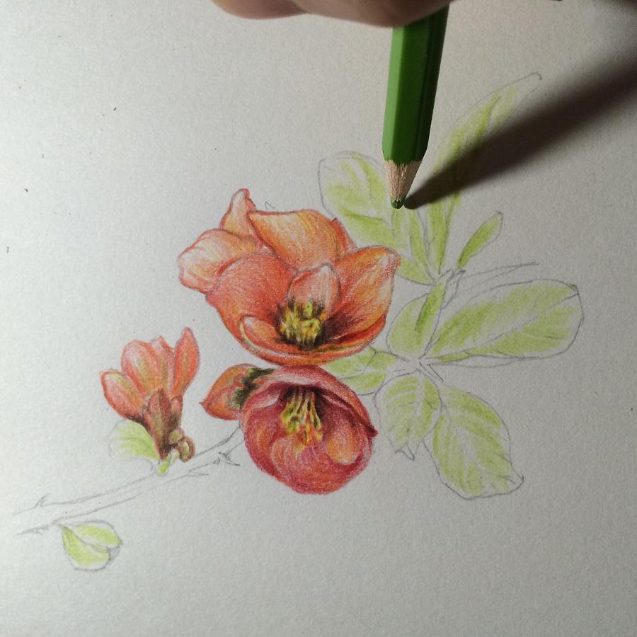 彩铅手绘肉植物