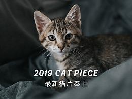 2019最新猫片提前祝大家新年快乐