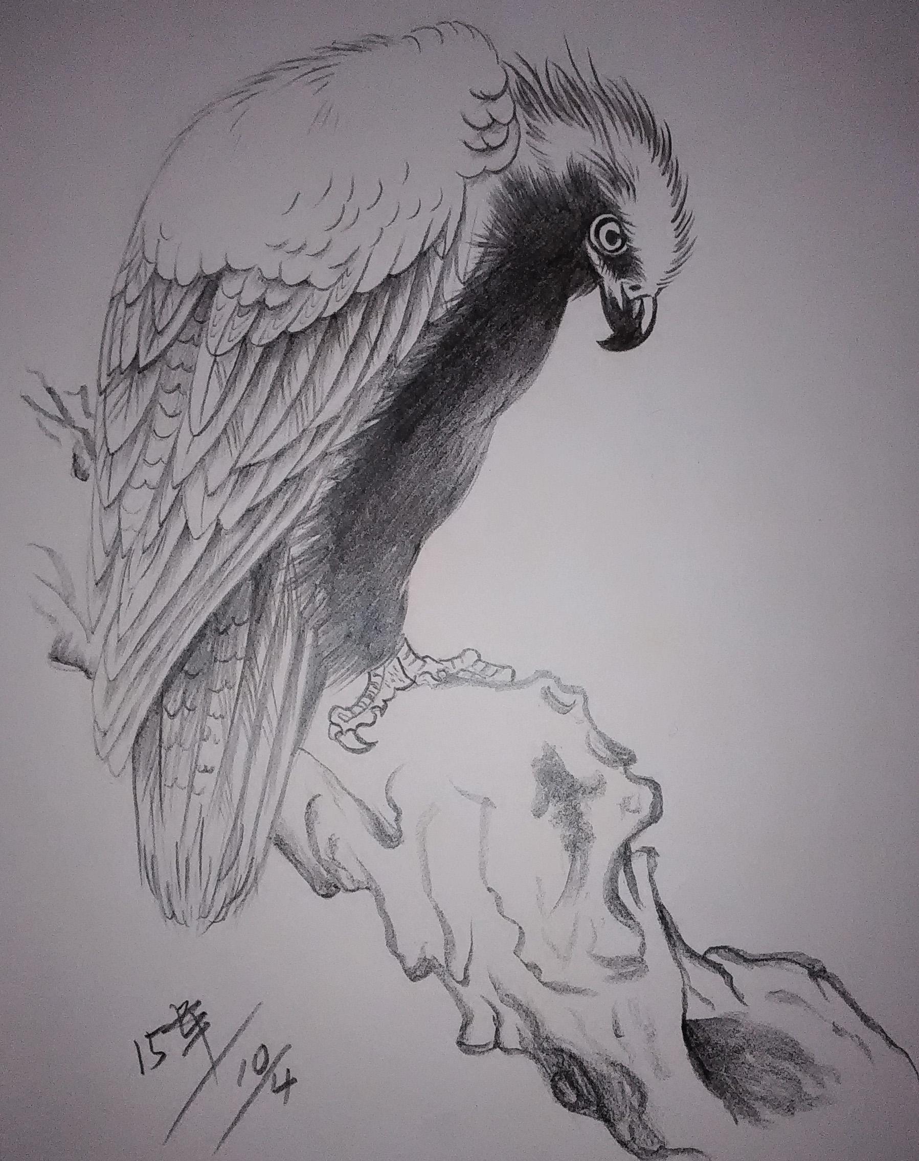 铅笔画 鸟类