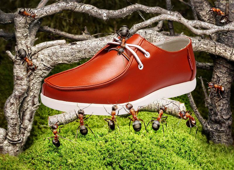 男鞋蚂蚁创意合成图|图形/图案|平面|qiumei190图片