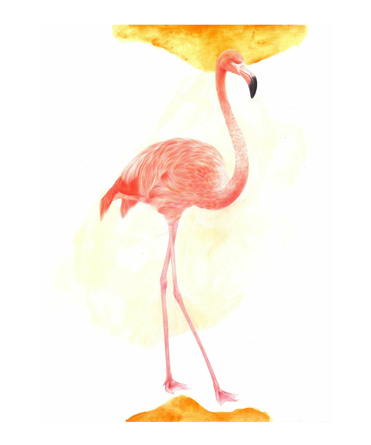 火烈鸟-彩铅画