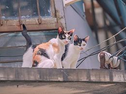 寻猫集45